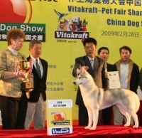 PetFair OpenBestinShow Sibe narrow Male And Female Siberian Husky Ready For New Home   Acosta   Animals ...